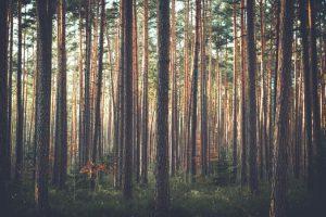 skogpexel